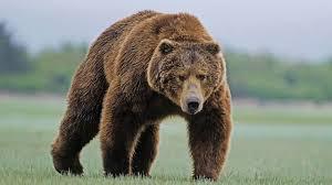 Kazakhstan Bear 1