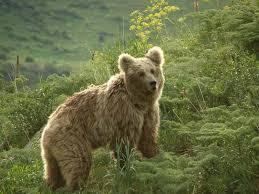 Kazakhstan Bear 2