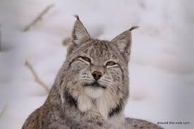 Kyrgyzstan Lynx 1