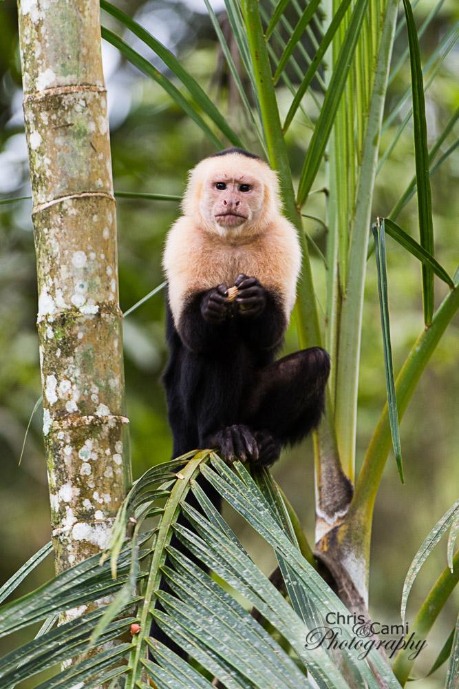 Primate-looking