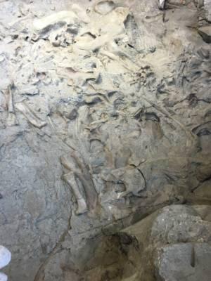 613-DinosaurFossil01