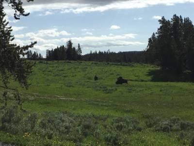616-YellowstoneWildlife05