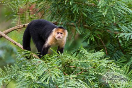 Primate-tree