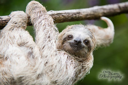 Sloth-Looking