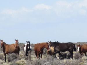 PeritoMerino-Inbound-horses